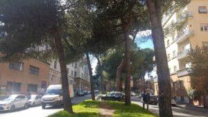 Cosa succede ai pini di Corso Trieste?